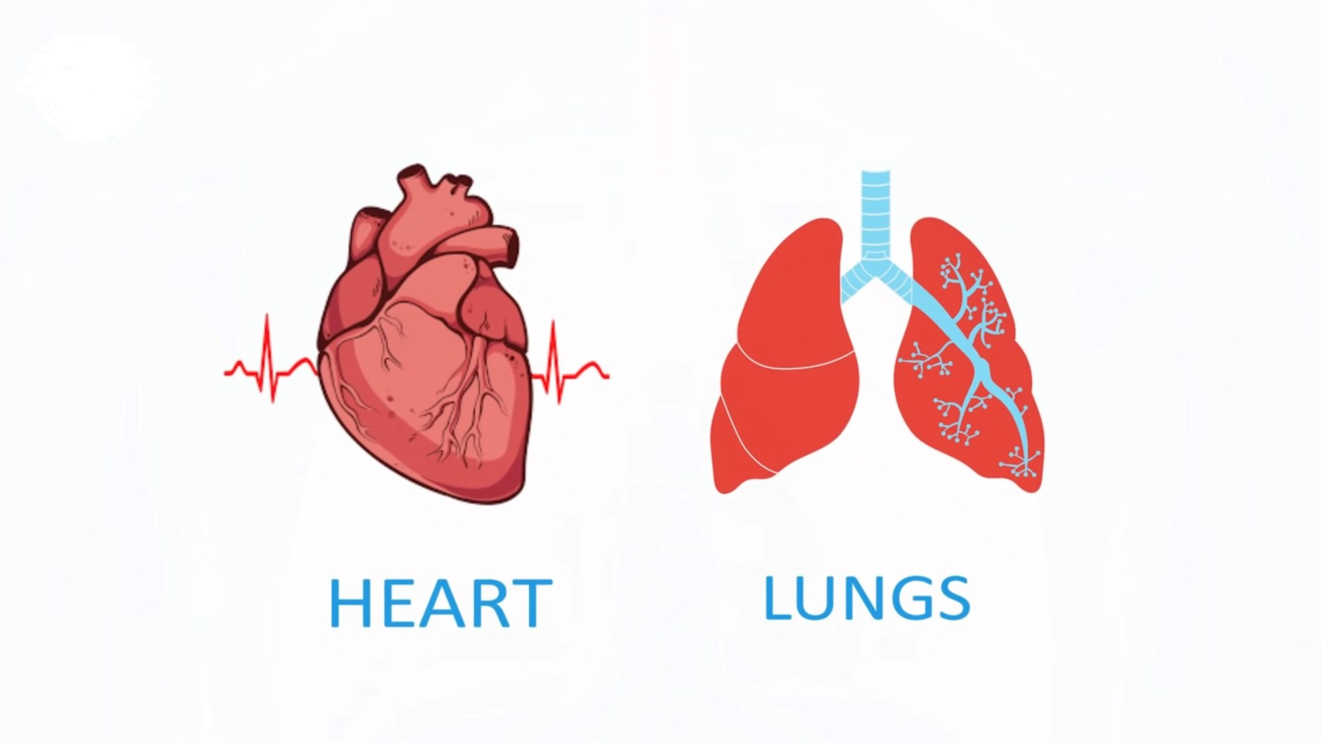 Strengthen your Heart and Lungs